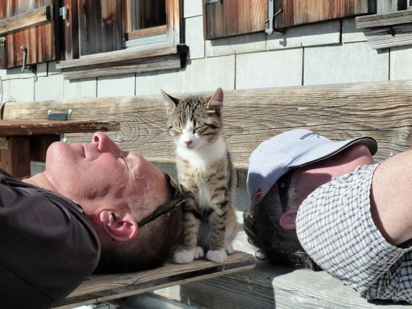 Konkordia Cats
